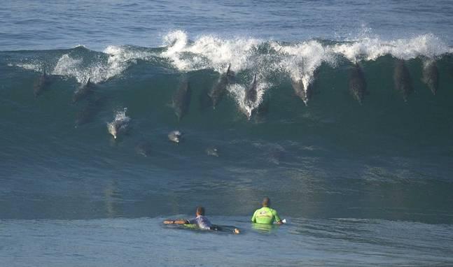 dauphins_surfers.jpg